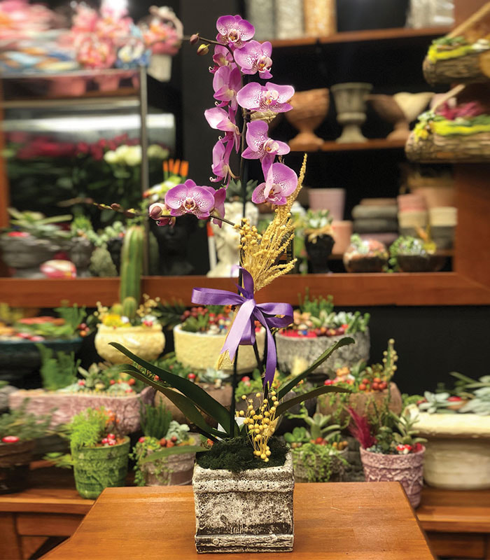 phalaenopsis Mor Benekli Orkide