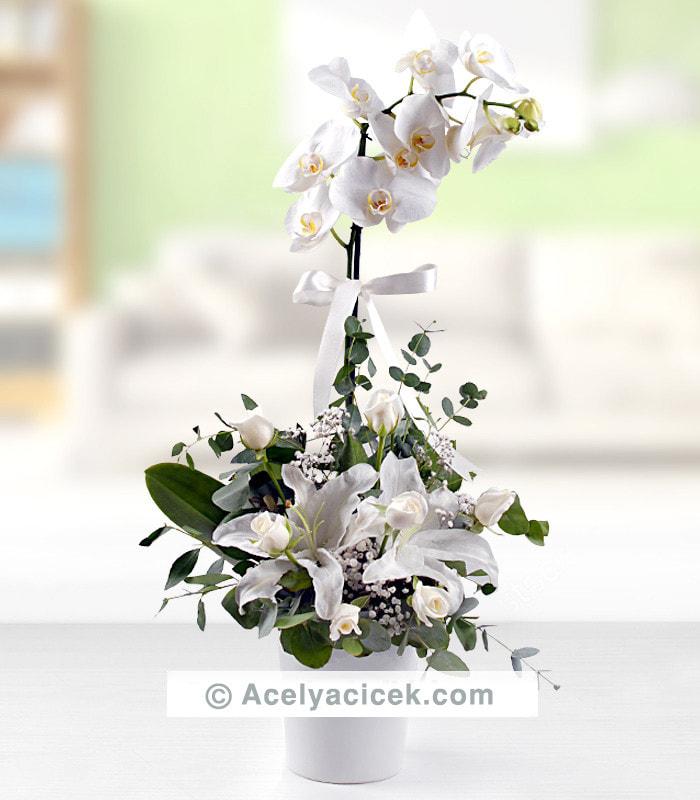 Beyaz Melek Orkide Aranjmanı