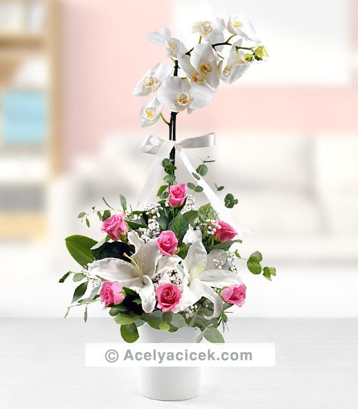 Orkide Pembe Gül