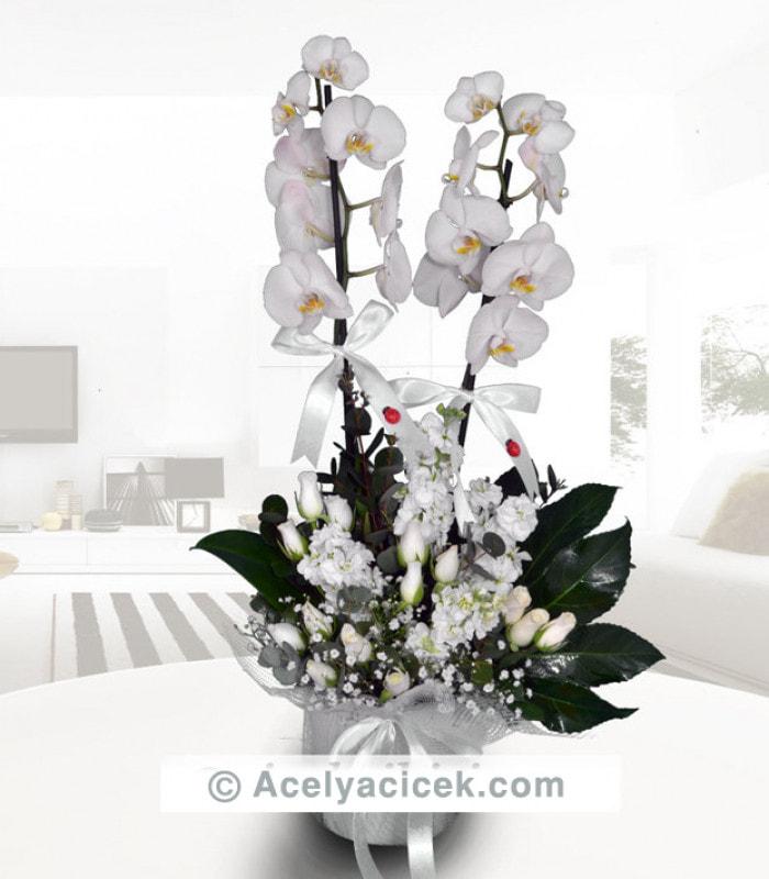 İki Dallı Orkide Arajmanı