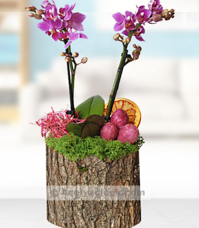 Doğal Minyatür Orkide