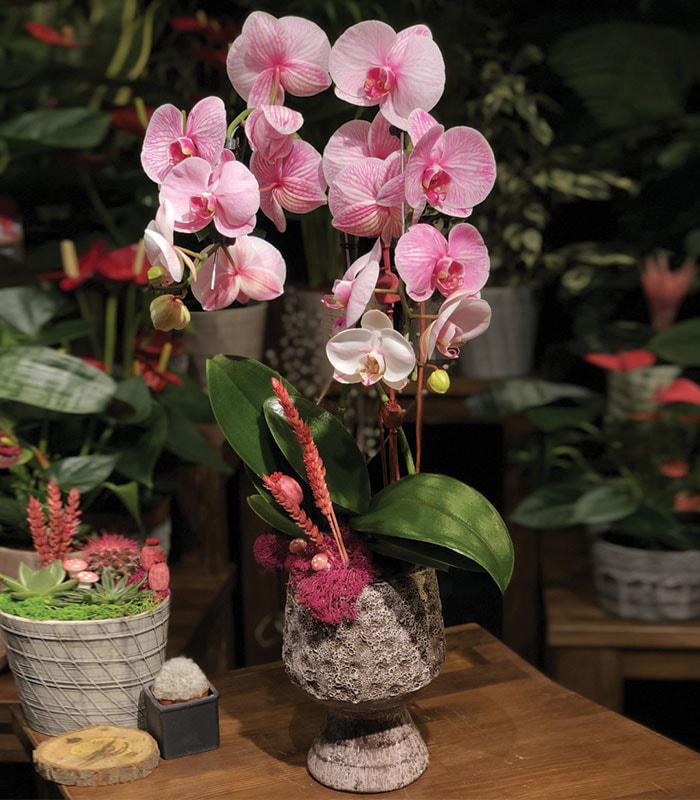 Formida Orkide