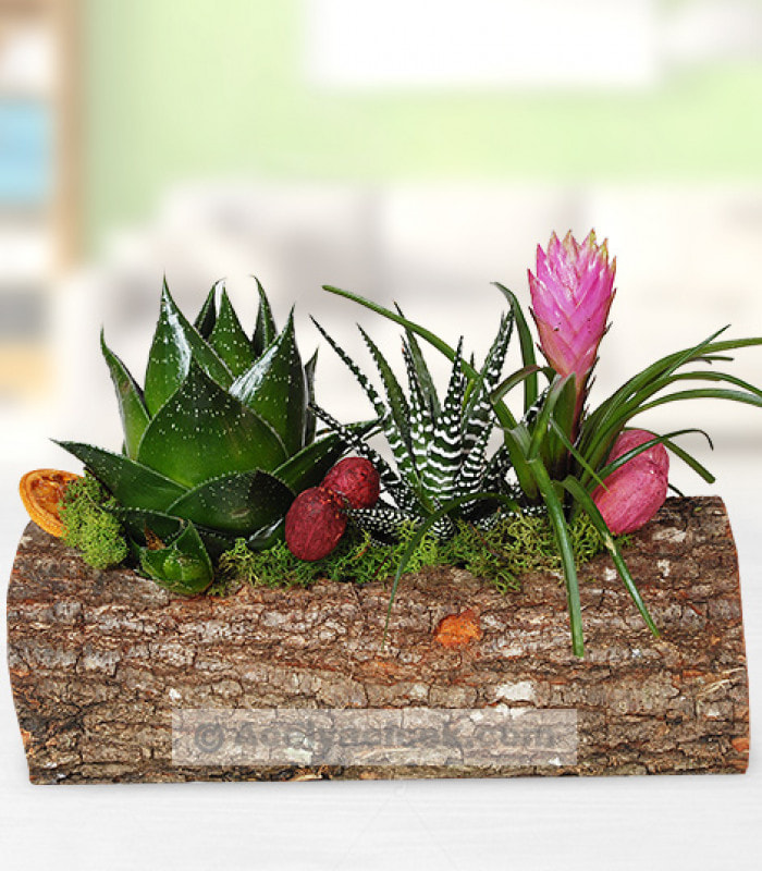Kütükte Doğal Bitkiler