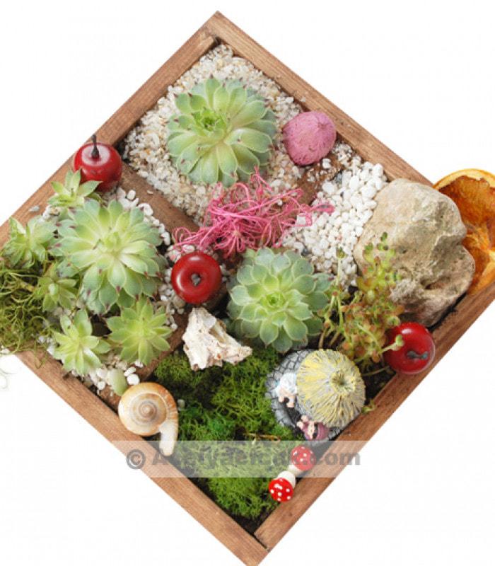 Mini Bahçe