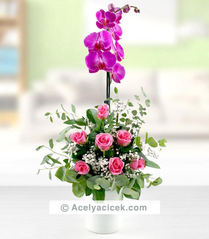 Orkide İle Pembe Gül