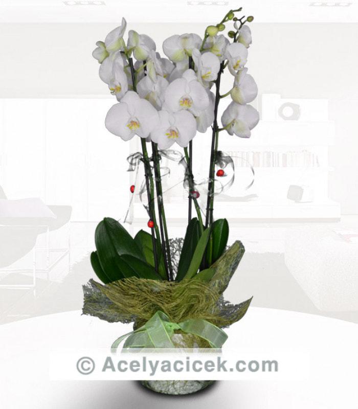 3 Dal Orkide Bahçesi