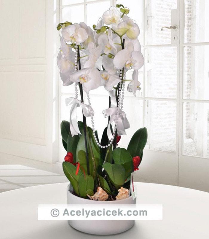 3 Dallı Beyaz Orkide