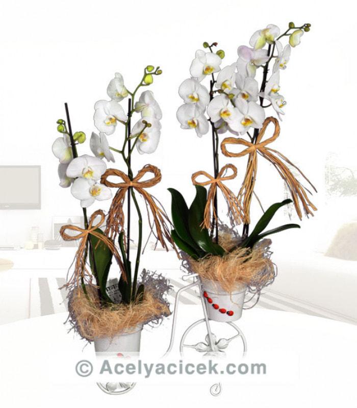 Bisiklette Vip Orkide