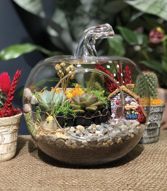 Hobi Bahçe Terrarium